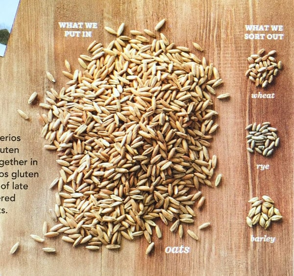 Photo of oats, wheat, rye, and barely on the back of a Honey Nut Cheerio box.