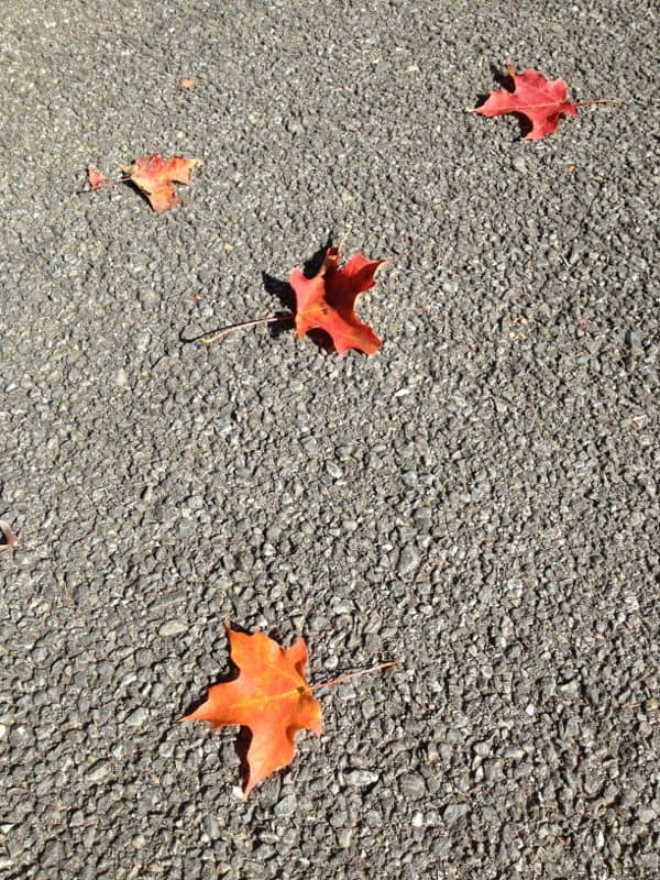 Autumn leaves on pavement.