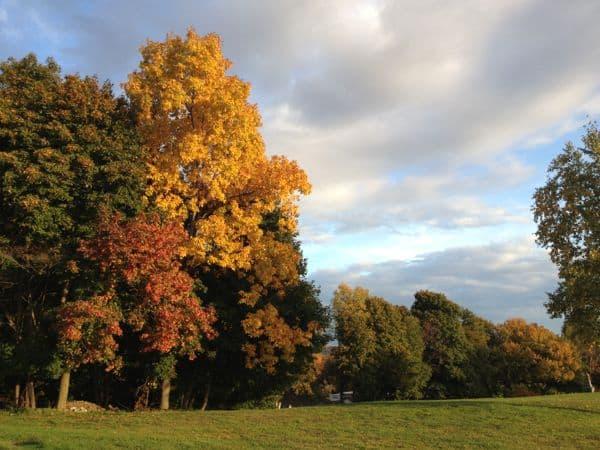 Autumn tree in a field.